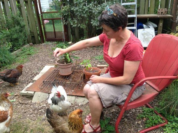 She has been raising hens for the last - Champaign Writing Rules For Backyard Chickens News Local/State