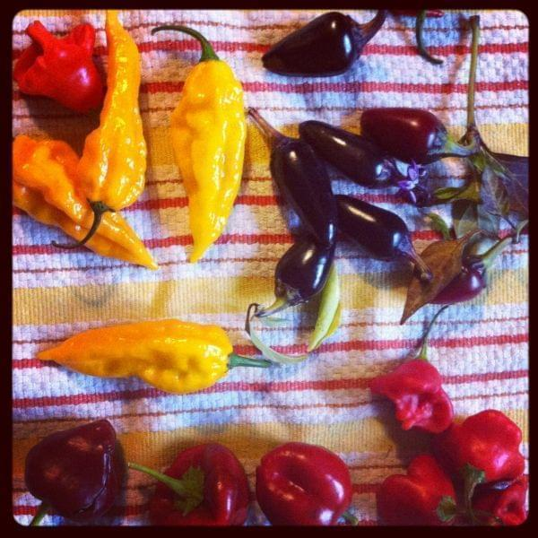 An array of hot peppers on a towel.