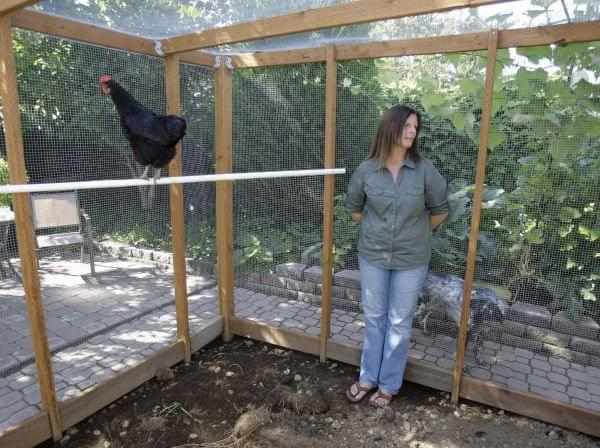 This photo taken Aug. 21, 2009 shows Barbara Palermo looking on while making remarks in her chicken coop in Salem, Ore.