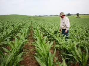 Crop consultant Dan Steiner inspects a field of corn near Norfolk, Nebraska.