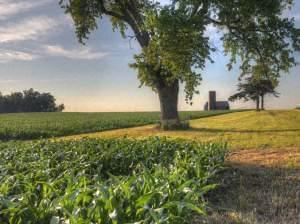 a photo of the prairie and a cornfield