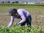 Agricultural work, which is very physically demanding, is also a risky business venture.