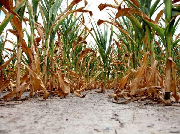 soil drought