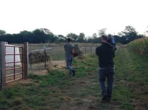 A man with a camera filming a man feeding goats