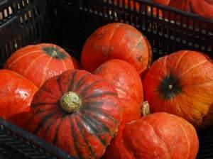 Orange winter squash at a farmers market