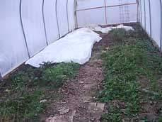 Cold hearty green vegetables growing in Karen's Garden in early March.