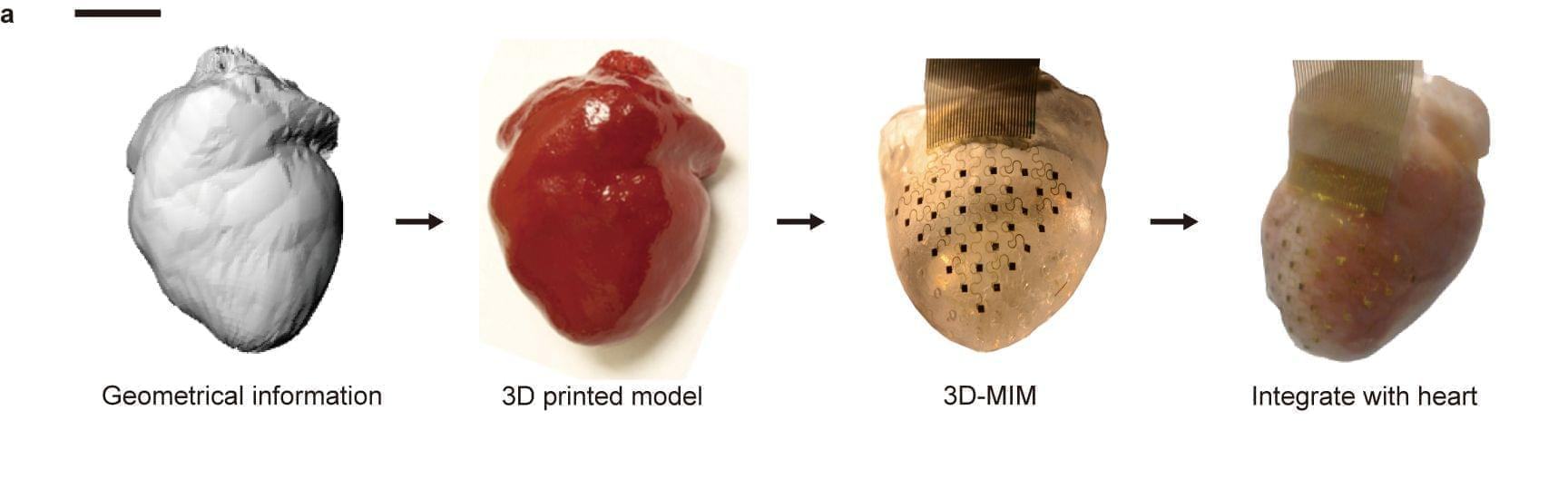 This diagram illustrates the steps involved in creating the new heart device.
