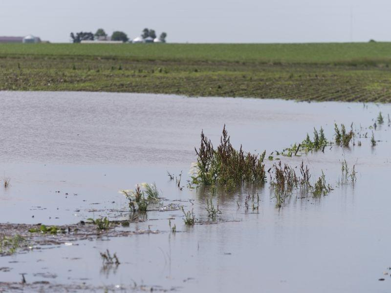 Supporters of crop insurance argue that the federal program helps farmers protect themselves from severe weather losses. Here, water pools in fields after a strong thunderstorm near Fairmont, Ill.