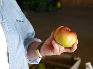 A woman's hand holding an apple.