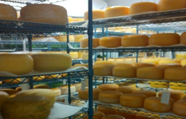 A room full of aging cheese.