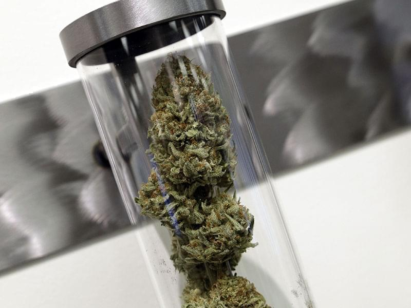 A sample of medical marijuana is displayed at a dispensary in Portland Oregon.
