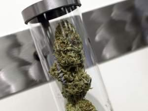 A sample of medical marijuana is displayed at a dispensary in Portland Oregon.