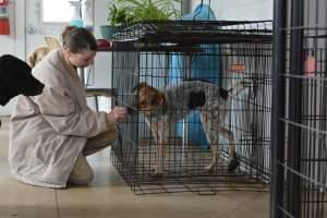 a woman at the Rockville Women's Prison working with a dog in their ADOPT program