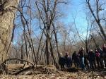 Participants at the Allerton Winter Tree Identification Hike looking up at a state champion  swamp white oak
