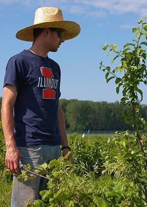 A graduate student looks over crops at U of I's Woody Perennial Polyculture site