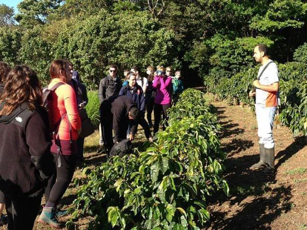 Anibal Torres explains how coffee is grown on a conventional plantation