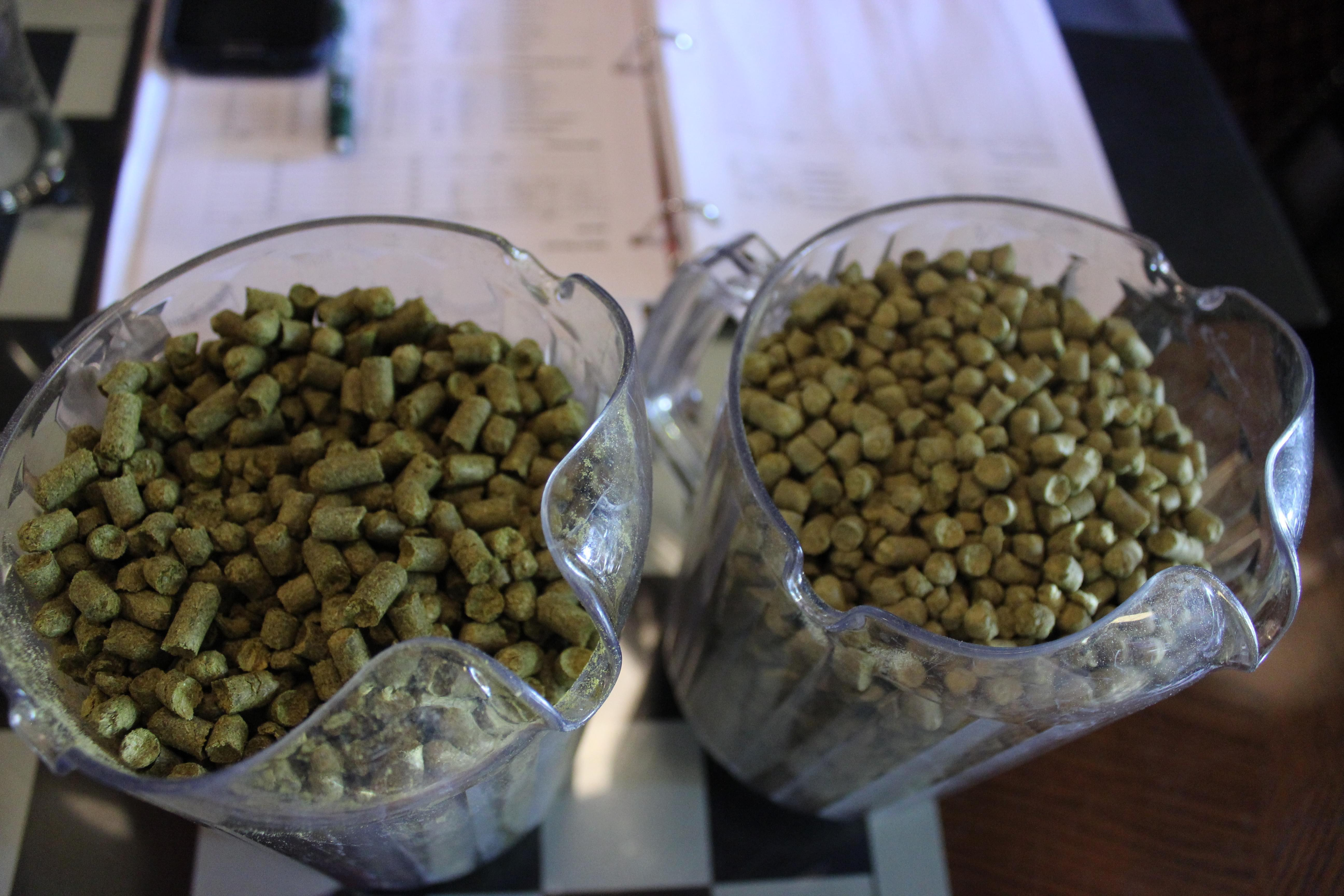 Cascade and centennial hops used for one of Bill Morgan's upcoming IPAs.