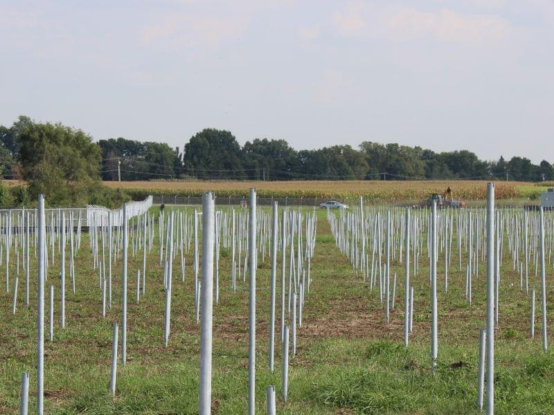 The site along Windsor Road on the University of Illinois Urbana campus, where a solar farm is under construction.
