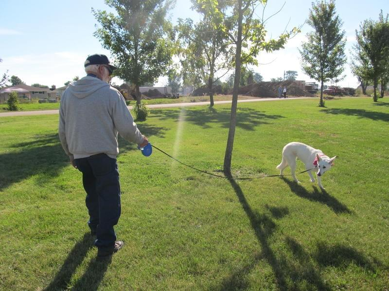 Clem Schultz walking his dog. Schultz lost his wife in the Fairdale tornado on April 9, 2015