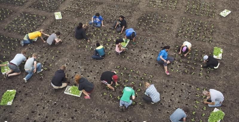 RIPE Project participants engaged in planting at the University of Illinois South Farms.