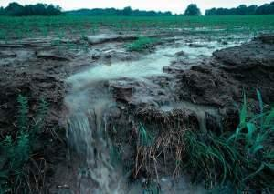Soil erosion on a farmland