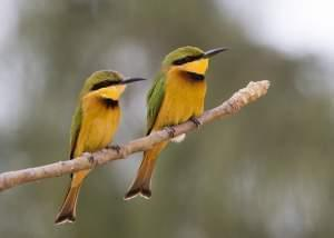 Two small birds perched on a branch. They are