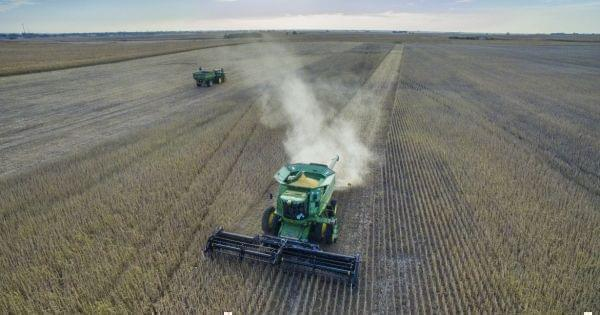 Central Illinois farmers harvest corn.