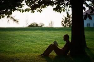 person under a tree reading