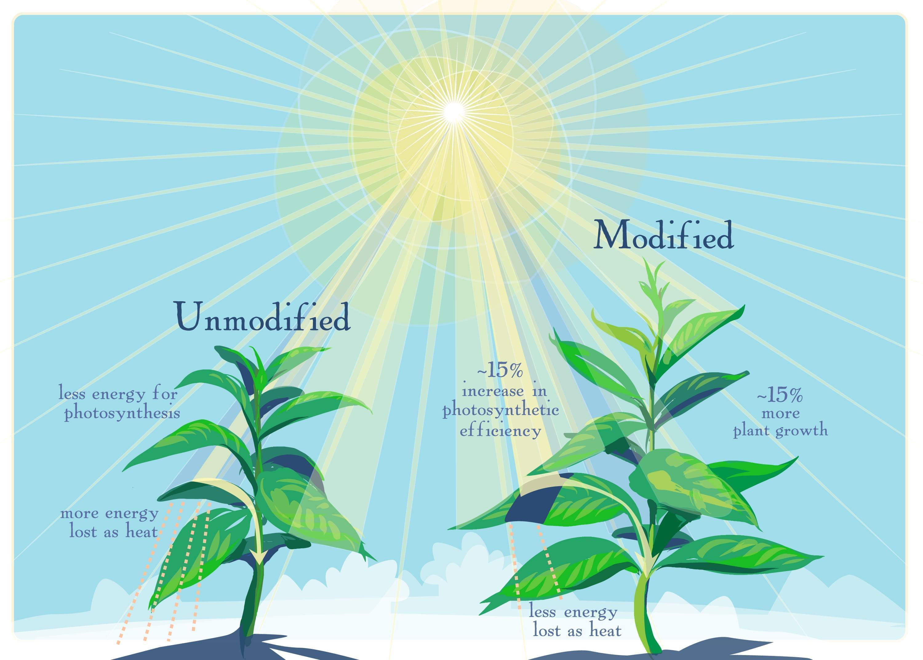 Graphic showing photosynthesis research.