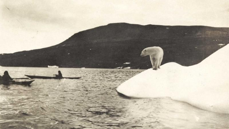 A polar bear watches Arctic explorers on the Crocker Land expedition.
