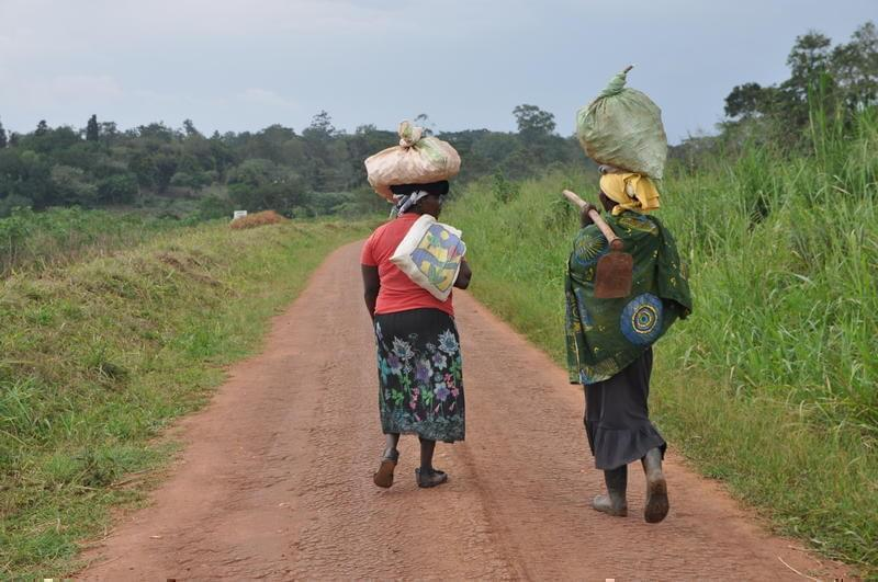 Two women walk home after a day of work at Uganda's National Agricultural Research Organisation in Namulonge.