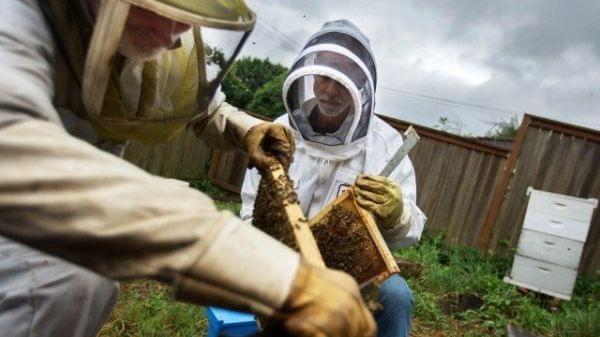 Beekeepers Glen Andresen and Tim Wessels are trying to breed a honey bee that is more resilient to colder climates.