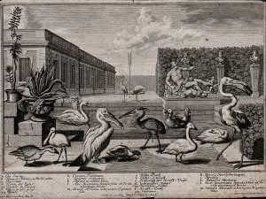 Drawing of birds in Greece