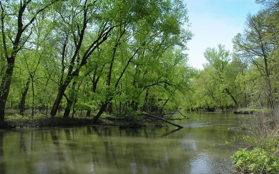 The Sangamon River at Allerton Park.