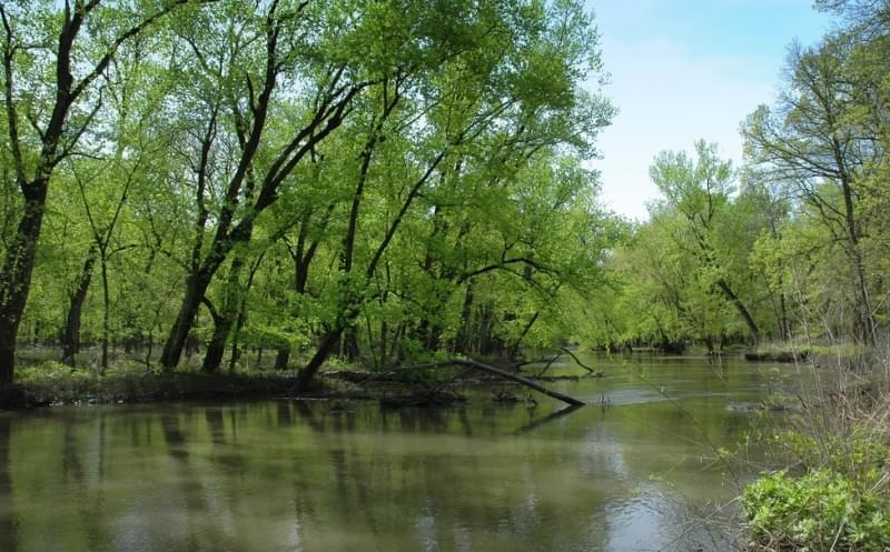 The Sangamon River at Allerton Park.