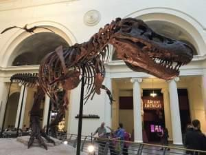 Sue the T. rex at the Field Museum in Chicago