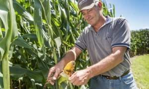 Farmer Paul Jeschke holds an ear of corn on his farm near Mazon, Ill.