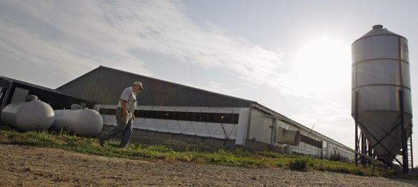 In this June, 28, 2012 photo, hog farmer Robert Young, 68, walks past his hog barn while tending to his livestock on his family farm in Buckhart, Ill.