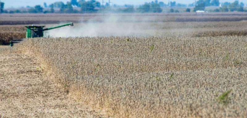 Soybean harvest continues just north of Mansfield, ILL on Wednesday, October 9, 2013.