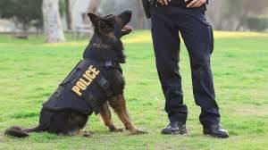 K-9 with police officer.