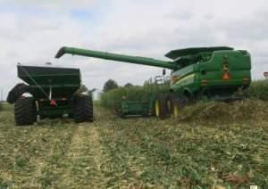 Corn harvest in Illinois.