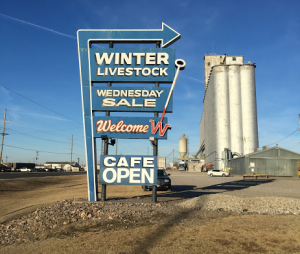 Dodge City, Kansas, holds weekly livestock auctions throughout the winter.