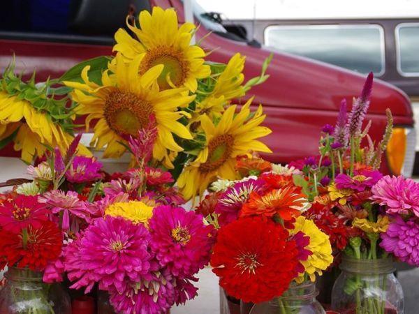 sunflowers and zinnias in jars
