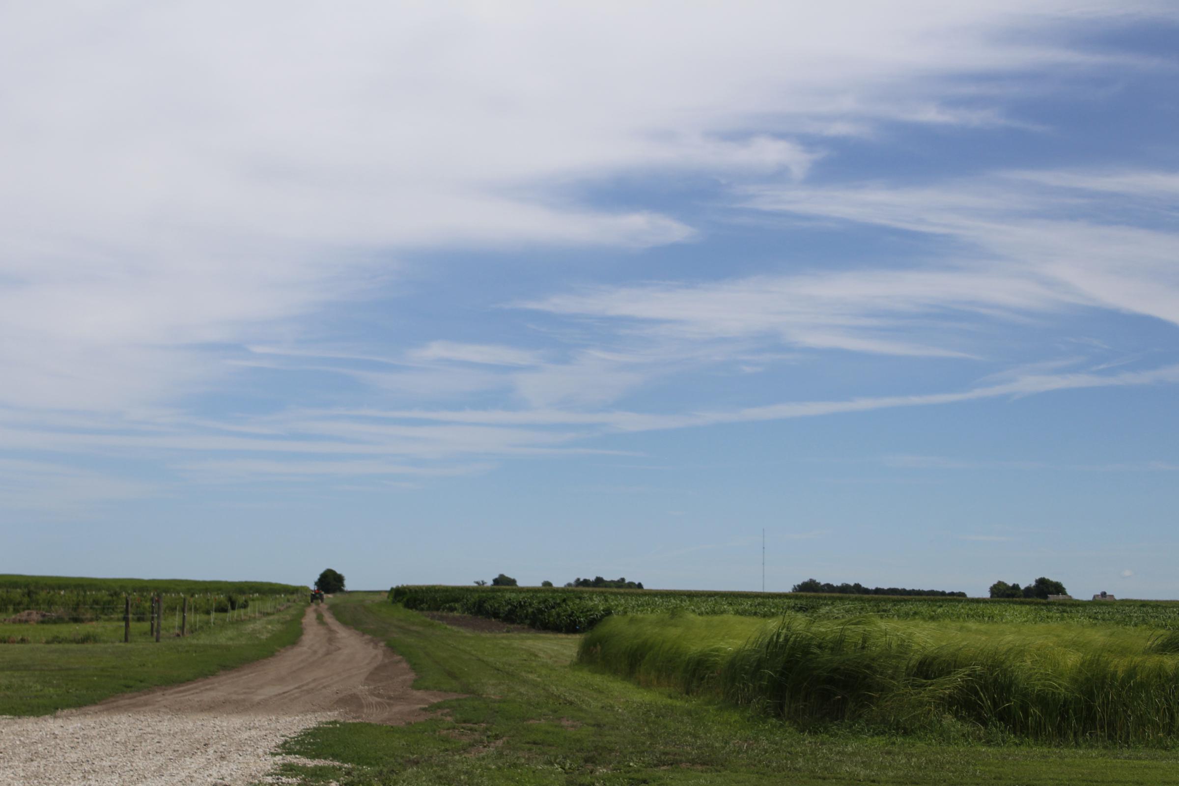 The University of Illinois Energy Farm, just south of Urbana.