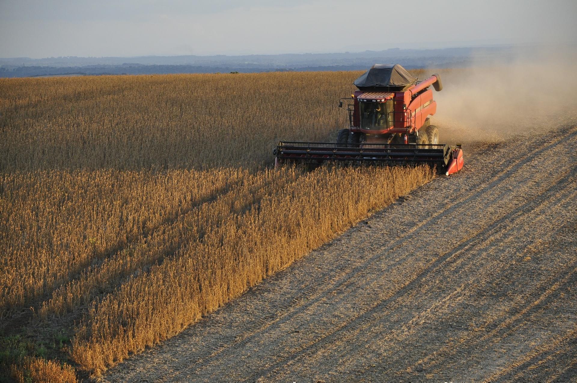 soybean farm