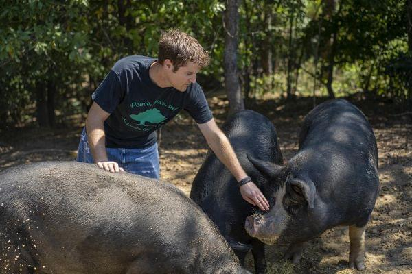 Josh Davis tends to his American mulefoot hogs on his farm in Pocahontas, Illinois.