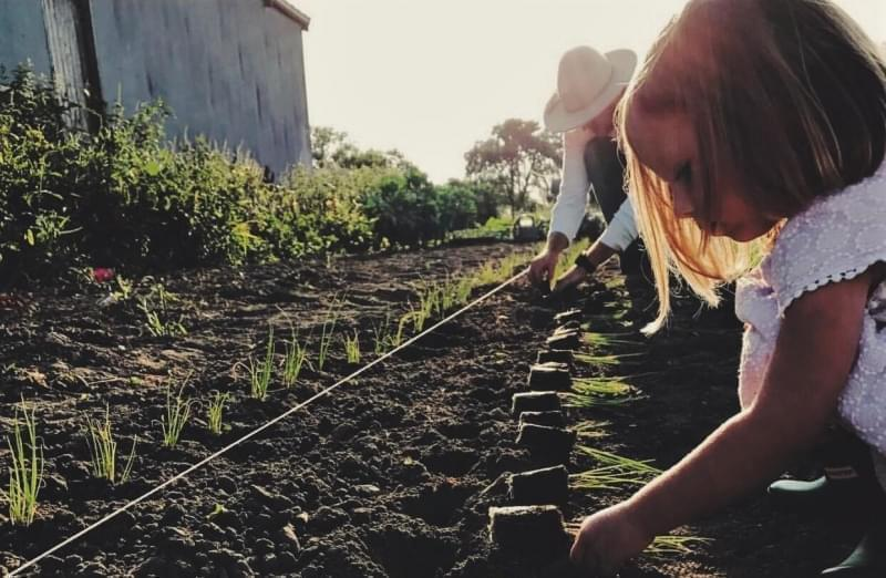 Four-year-old Emma is already helping out at Field and Farm Co., doing things like transplanting onions.