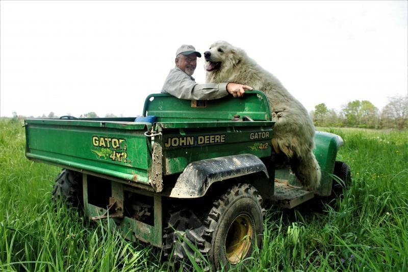 Dave Bishop drives around PrairiErth Farm on his Gator, often with dog Molly behind or hopping on for a ride.