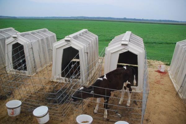 Policing The Dairy Industry