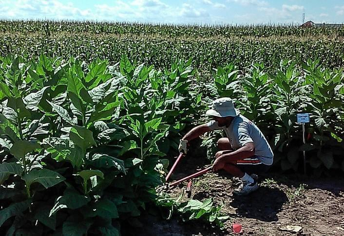 person working in field